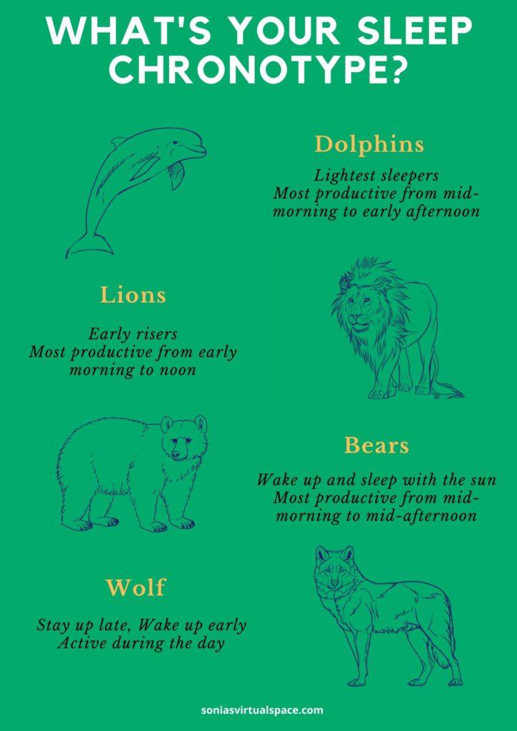 dolphin, wolf, lion, bear, four sleep chronotypes